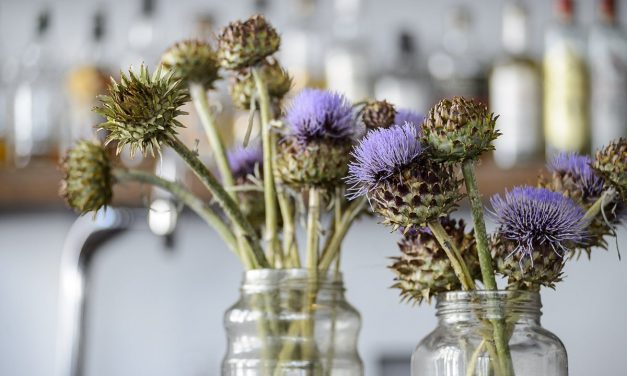 The health virtues of the cardoon