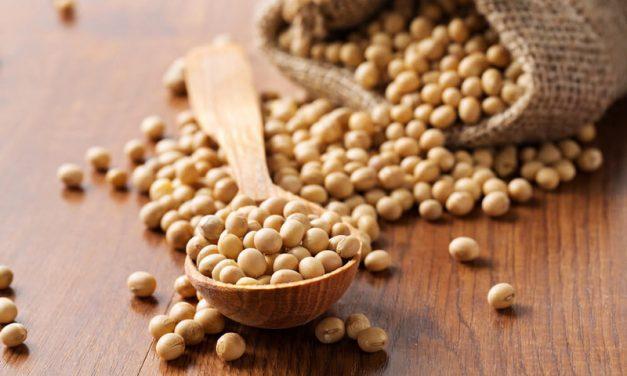 Le soja est il dangereux pour votre santé ?
