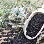 Aspect nutritionnel de l'huile de nigelle : quels sont les bienfaits ?